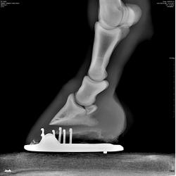 Exemple de radiologie équine n°3 - Sabot vue de côté