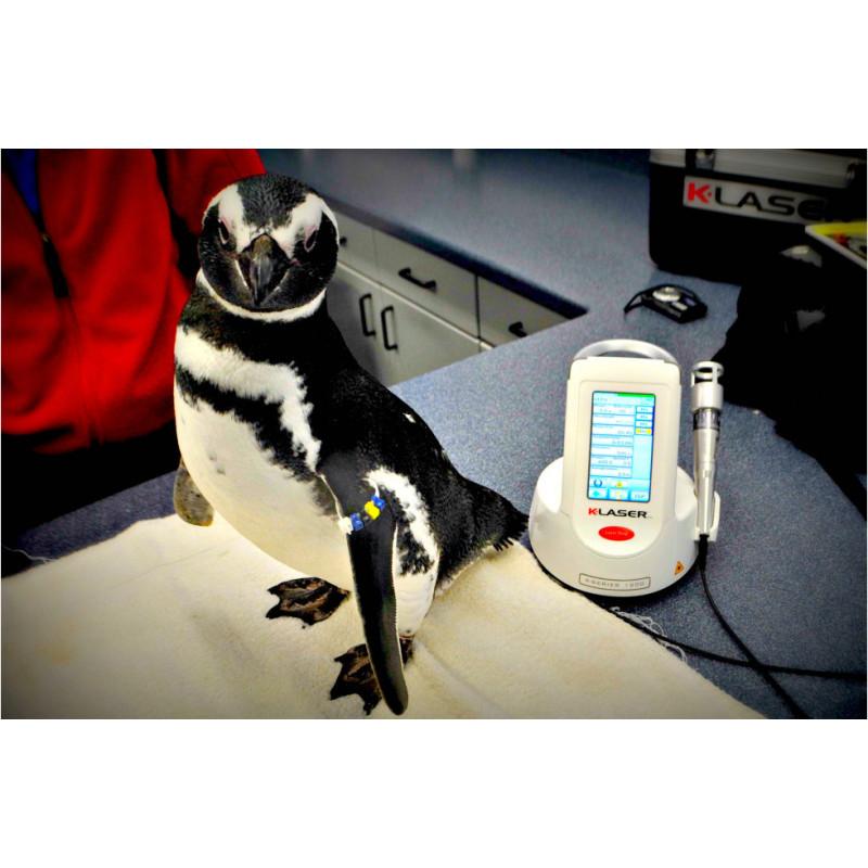 K-laser Cube - Exemple d'utilisation sur un oiseau